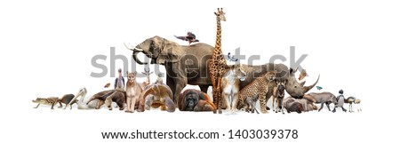 Large group of wild zoo animals together on horizontal web banner with room for text in white space Royalty-Free Stock Photo #1403039378