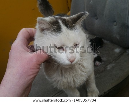 cat scratching and scratching and scratching #1403057984