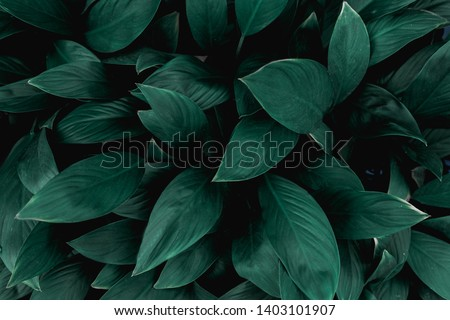 closeup nature view of green leaf in garden, dark wallpaper concept, nature background, tropical leaf #1403101907