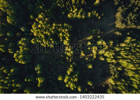 Green trees from above, drone photo of forest in sunset time  #1403222435