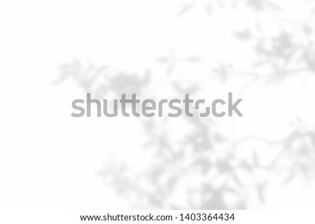 Shadow background of natural leaves tree branch and tree trunk pattern on white wall texture , black and white monochrome tone