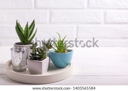 Succulents and cactus plants in pots on tray  near by white brick wall. Potted indoor house plants. Modern minimalistic interior. Selective focus. Place for text. #1403565584