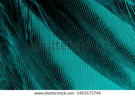 Beautiful black,green turquoise color trends feather pattern texture background #1403573744