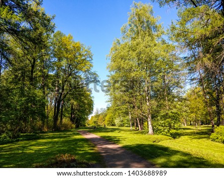 Spring forest path landscape view. Forest path in springtime blooming. Spring bloom forest path landscape. Spring forrest path view #1403688989