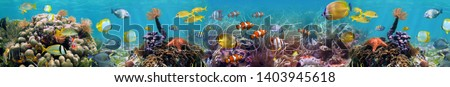 Beautiful underwater world coral reef panorama landscape. Horizontal banner. High quality image for glass panels (skinali). Royalty-Free Stock Photo #1403945618