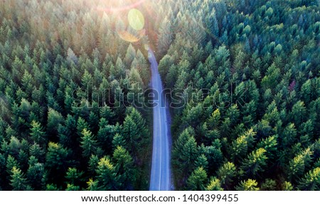 Top view of dark green forest landscape in winter. Aerial nature scene of pine trees and asphalt road. Countryside path trough coniferous wood form above. Adventure travel concept background. #1404399455