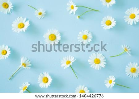 Fresh, white daisies on light pastel blue background. Beautiful flower pattern. Closeup.