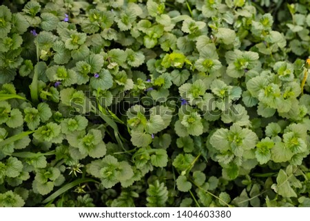 saturated green grass, plants close up #1404603380