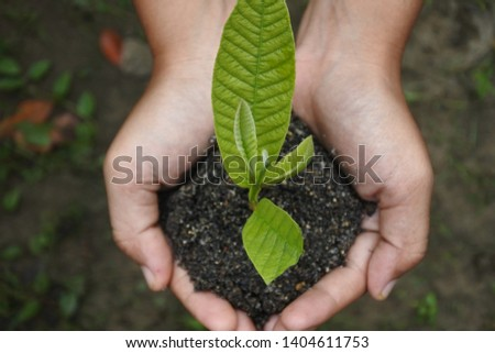 plant buds with hand-held soil #1404611753