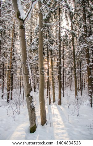 Winter landscape trees. Beautiful trees in the snow.  #1404634523