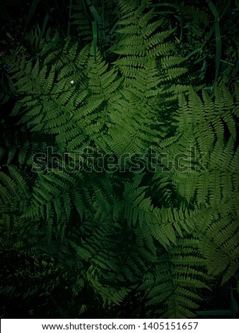Fern, tropical leaves, succulent green leaves, leaves for background, exotic natural background with plants, fern leaf texture #1405151657