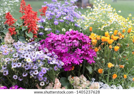 Beautiful Colorful Flowers Background Image | Garden | Floral - Image #1405237628