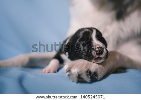 Newborn puppy sleep on mother dog paw #1405245071