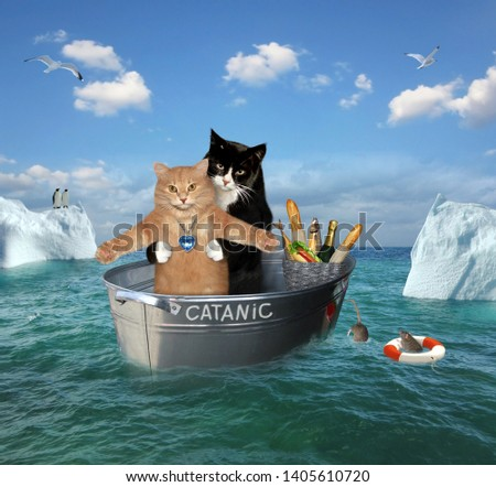The two brave cats are drifting in the steel washtub among the icebergsin the sea. Their ship is called Catanic. #1405610720