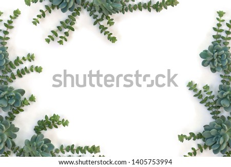 Creative frame of green blue succulents on a white background with space for text. Top view, flat lay  #1405753994