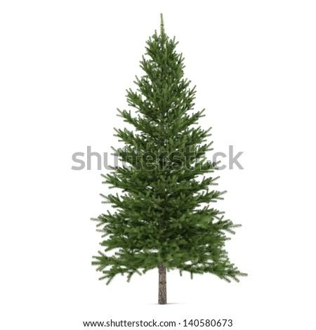 Tree isolated. Pinus fir-tree #140580673