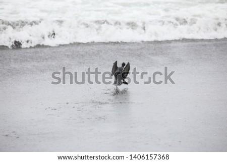 bird on the black beach in a wild #1406157368