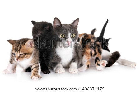 moggy kitten and mother in front of white background #1406371175