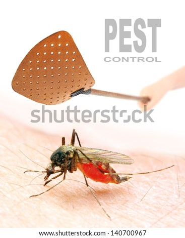 Smashing flyswatter over a sucking mosquito. Ecological pest control. Picture with space for your text.