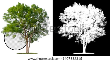 single tree with clipping path and alpha channel #1407332315