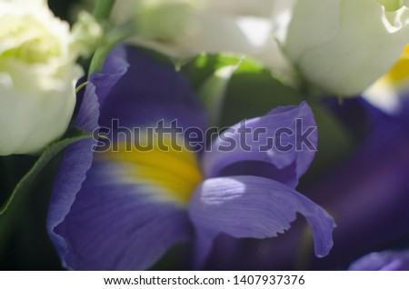 purple irises and wedding rings #1407937376