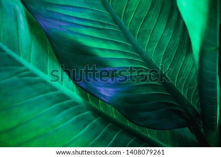 abstract green leaf texture, nature background, tropical leaf #1408079261