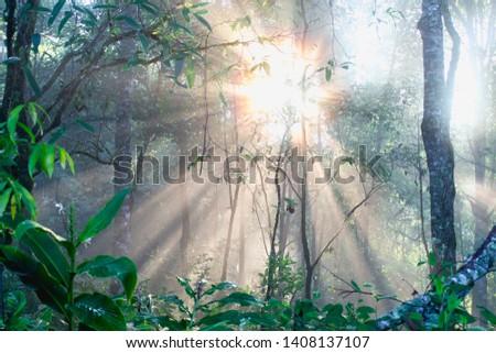 Dark forest sunlight landscape, Sunlight in the forest in the morning #1408137107