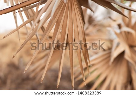 dry palm leaf in palm forest #1408323389