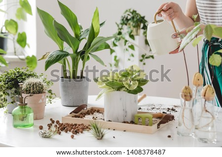 Woman gardeners  watering plant in marble ceramic pots on the white wooden table. Concept of home garden. Spring time. Stylish interior with a lot of plants. Taking care of home plants. Template. #1408378487
