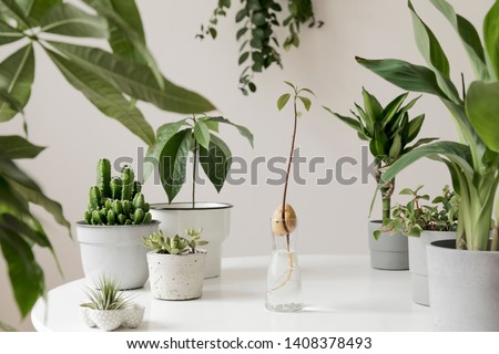 Stylish and botany composition of home interior garden filled a lot of plants in different design, elegant pots and avocado plant in glass bottle. White backgrounds walls. Green is better. Template. #1408378493