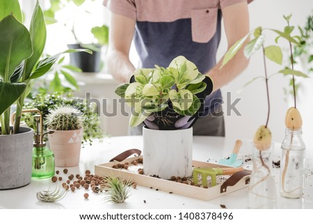 Home gardener  transplanting plant in ceramic pots on the white wooden table. Concept of home garden. Spring time. Stylish interior with a lot of plants. Taking care of home plants. Template. #1408378496