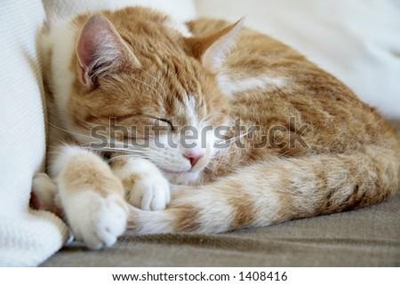 Sleepy brown cat #1408416