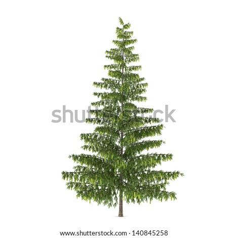 Tree isolated. Pinus  fir-tree #140845258