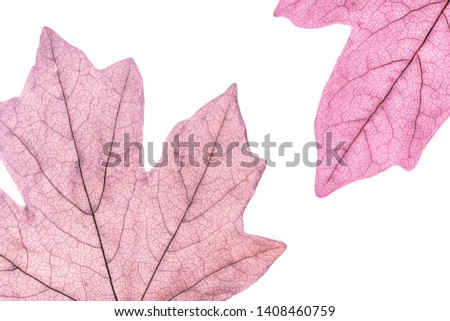 Macro image of colorful tree leaves, isolated on white, natural background #1408460759