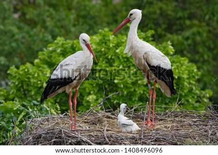 adult White Stork in nest #1408496096