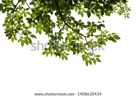 green tree branch isolated on white background Royalty-Free Stock Photo #1408620434