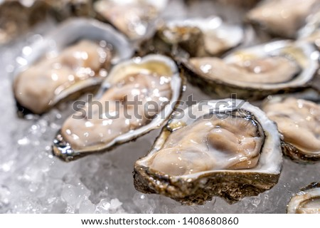 Fresh oysters on ice at a seafood restaurant. Ready for eat or serving, Selective focus. Oysters are protein rich and raw with lemon a delicacy #1408680860