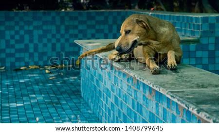 street dog in a swimming pool #1408799645
