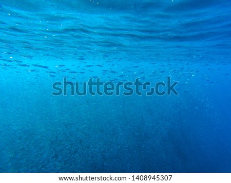 Huge fish school under seawater surface.  Tropical sea vacation photo. Undersea landscape with sardine fish shoal and blue sea. Tropical seashore animals underwater photo. Undersea landscape #1408945307
