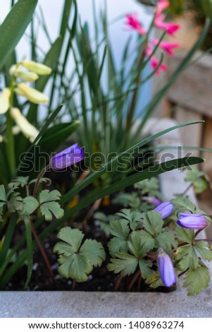 spring flowers in a plant pot blooming in different colours #1408963274