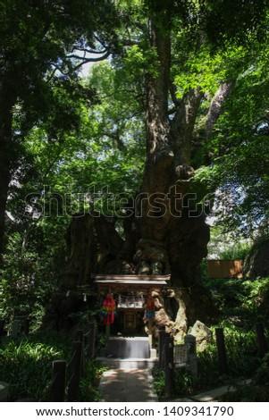 Atami, Japan - August 24, 2012: Kinomiya Jinja Shrine  a locate 2000 year old sacred tree in Shizuoka, Japan. #1409341790