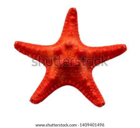 petrified red starfish on white background #1409401496