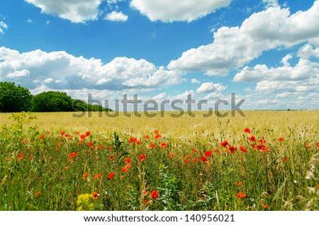 poppies on yellow field and clouds over it. soft focus on bottom of picture