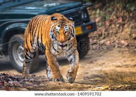 Sharmili Tigress Bijrani zone Jim Corbett India #1409591702