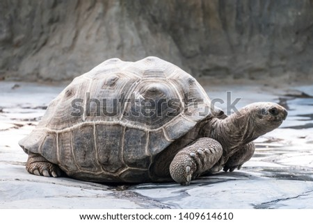A big turtle moving slowly #1409614610