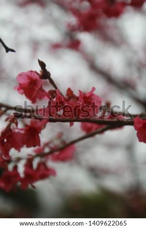 Pink flower sakura on soft background. #1409622065