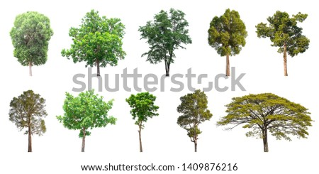Isolated trees collection on white background #1409876216