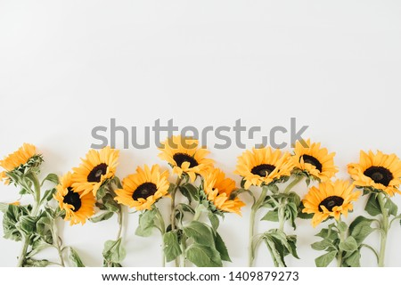Sunflowers pattern on white background. Flat lay, top view blog hero header.