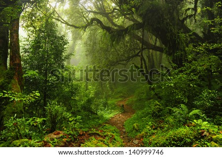 Subtropical forest in Nepal Royalty-Free Stock Photo #140999746