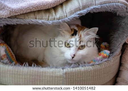 White domestic long haired cat #1410051482